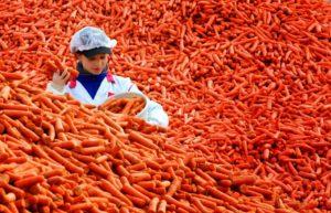 Бета-каротин в морковке