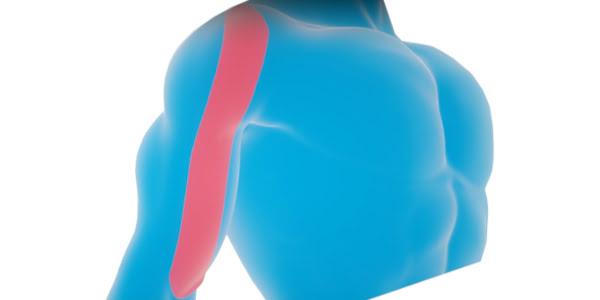 Схема для плеча